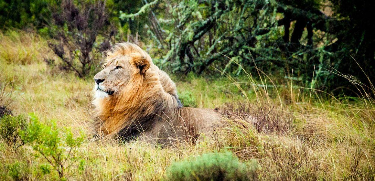 L'Afrique du Sud, une destination nature de référence