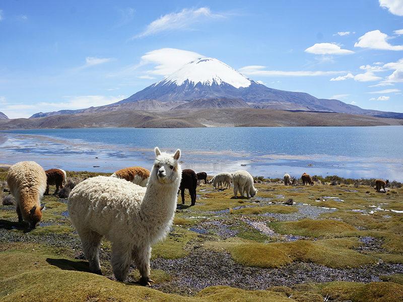 Ces destinations coup de cœur en Amérique du Sud
