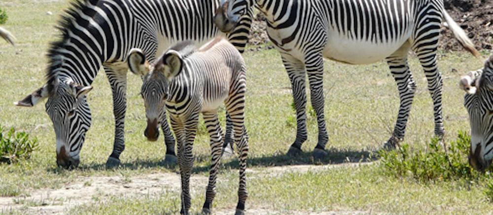 Visiter la réserve africaine de Sigean